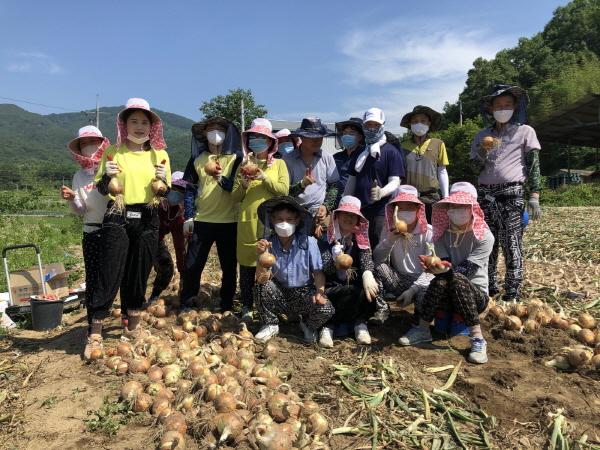 크기변환_사본 -농촌지도과, 양파수확 일손돕기에 구슬땀_-농촌지도과(사진1).jpg