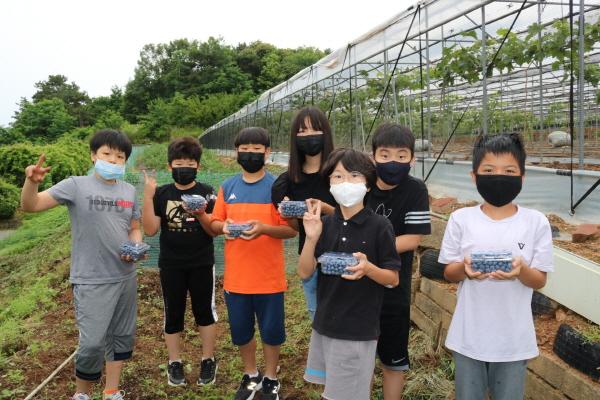 크기변환_사본 -개령서부초등학교_2020 블루베리 수확 사진 1.jpg