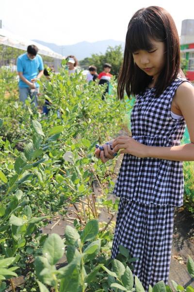 크기변환_회전_사본 -개령서부초등학교_2020 블루베리 수확 사진 2.jpg