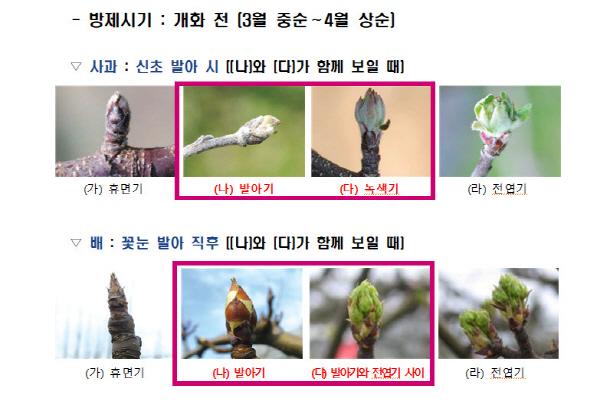 크기변환_사본 -김천시, 과수화상병 적기방제가 중요-기술지원과(사진).jpg